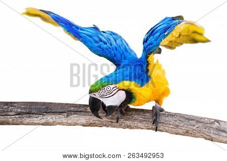Colorful Parrot Cut Out Against A White Background