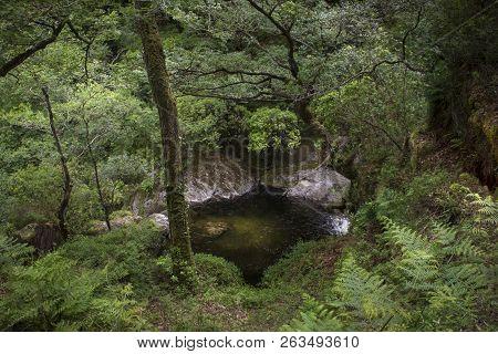Landscape Views Of Devils Bridge Woodland, Wales,uk