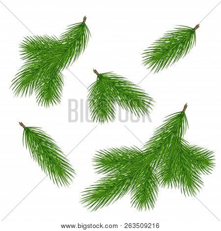 Pine Tree Branches. Christmas Fir Tree Branch. Vector Xmas Decorarion Elements. Illustration Of Pine