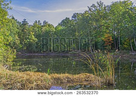 Forest Pond. Water Reservoir, Pond Located In The Forest. High Shores Overgrown With Deciduous Trees