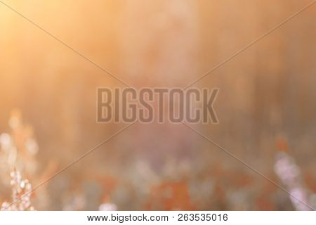 Autumnal Natural Bokeh With Sun For Background Or Backdrop.