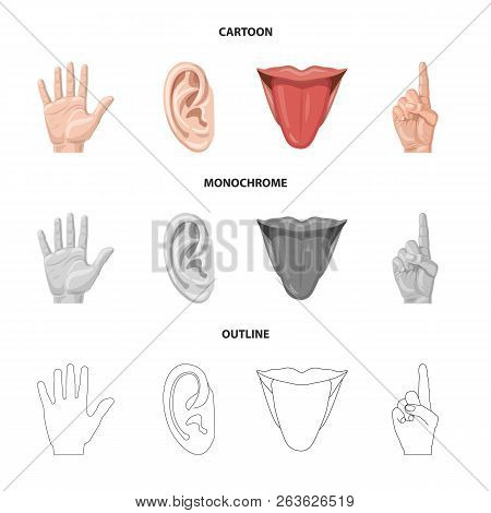 Vector Illustration Of Human And Part Sign. Collection Of Human And Woman Stock Vector Illustration.
