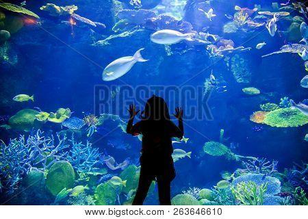 Kids Look Up On Underwater Aquarium