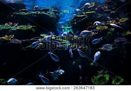 Underwater Aquarium With Fish And Coral
