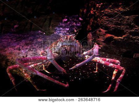 Spidercrab In Underwater Aquarium