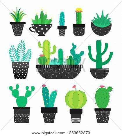 Set Of Cactus And Succulents In The Pots Isolated On White. Vector Illustration.