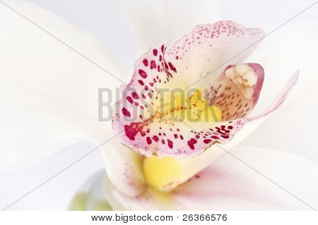 closeup of delicate white orchid