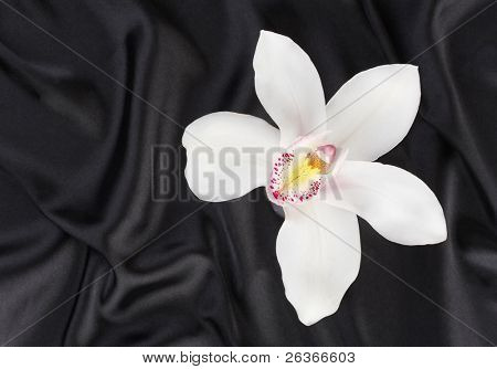 delicate orchid on black satin