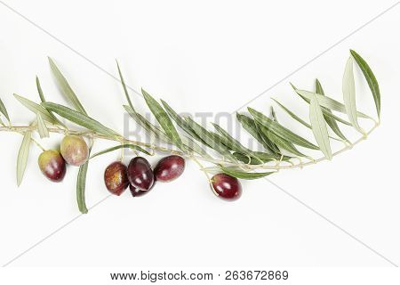 Olive Tree Twig With Olives On White