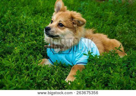 Little Puppy Lies On Forest Moss Little Puppy Lies On Forest Moss