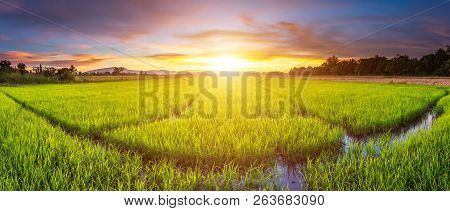 Panorama Landscape Of Rice Field And Beautiful Sky Sunset