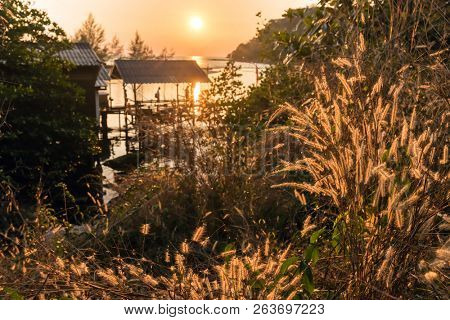 Warm tropical sunset on tall grass and coastline, Thailand