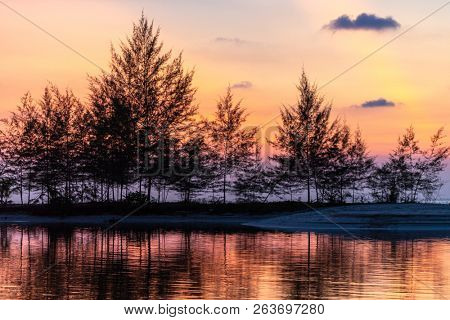 Tropical sunset behind filao trees on the shore