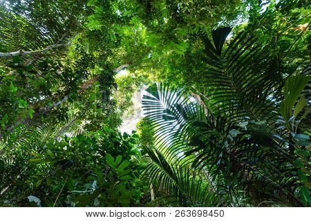 The lush jungle vegetation of the Taman Negara rainforest, Malaysia