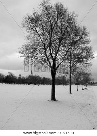 Winter Tree 01