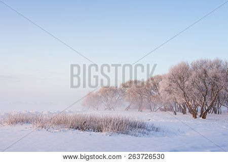 Snowy Winter Scene In The Morning. Frosty Trees On Icy White Meadow On Clear Misty Morning. Winter L