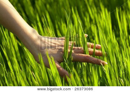 close up of a woman's hand touching the grass, 'feeling nature'
