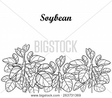 Vector Field With Outline Soybean Or Soy Bean With Pods And Ornate Leaf In Black Isolated On White B