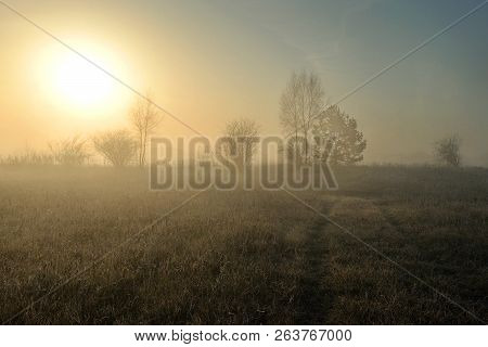 Beautiful Landscape With Fog At Sunrise. Forest With Fog. Autumn Morning