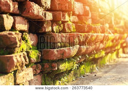 Old Brick Wall And Green Mos With Sun Light.