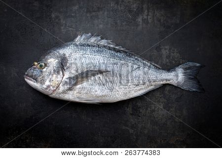 Fresh saltwater gilthead seabream as top view on a black rustic background with copy space  poster
