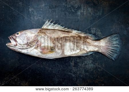 Fresh saltwater white grouper as top view on black rustic background with copy space  poster