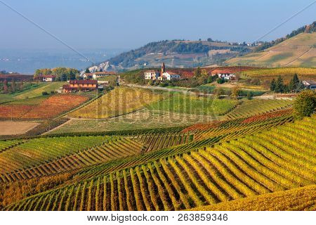 Colorful autumnal vineyards on the hills of Langhe in Piedmont, Northern Italy.