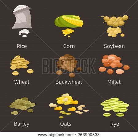 Ereals And Legumes Of Various Agricultural Types Of Culture. Barley And Wheat, Rice And Buckwheat, M