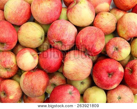 Ripe Red Apples. Apple Harvest.    Ripe Red Apples. Crop Of Apples. Apple Background