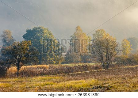 Trees In Fall Color. Beautiful Weather Conditions At Sunrise