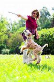Jumiping dog on green grass (Irish soft coated wheaten terrier) poster
