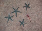 This sea star is captured t the beach. poster