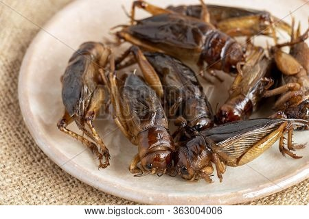 Food Insects: Crickets Insect Deep-fried Crispy For Eating As Food Items In Plate On Sackcloth, It I
