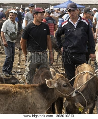 Osh, Kyrgyzstan - June 30, 2019: Livestock Market With Man And Cattle In Osh, Kyrgyzstan.