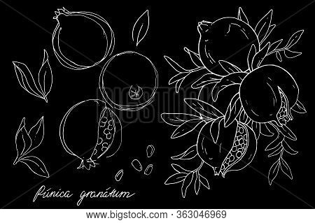 Ripe Fruit Of Pomegranate On A Branch Is Isolated On A Black Background. Vector Illustration Of Pome