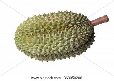 The Popular Thailand Of Durian The Big Ripe Chanee Durian ,the Most Delicious Duriran Of Thailand