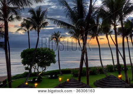 Maui Sunset Under Palms