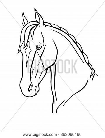 Horse. Graceful Akhal-teke Horse Head - Linear Vector Illustration For Coloring. Noble Thoroughbred