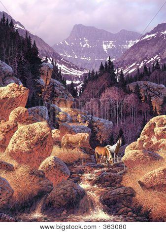 Wild Horses In The Rockies