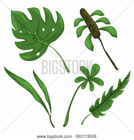 Jungle Leaves And Flowers Vector Set. Forest Nature Plants Vector Collection. Isolated Elements For