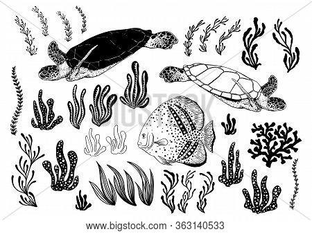 Hand Drawn Turtles, Fish, Alga, Sea Plants And Aquarium Seaweed Silhouette Set. Vector Illustration