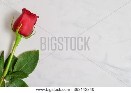 Single Long Stem Red Rose Resting On A Luxurious White Marble Background.