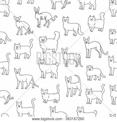 Cats Seamless Pattern Vector Black White Domestic Pedigree Pets Laterally Contour Sketch Background.
