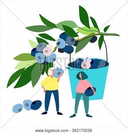 Women Picking Blueberries Vector Illustration. Harvesting Concept. Agritourism Concept. Pick-your-ow