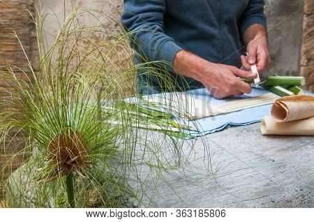 Close-up View Of A Papyrus Plant And A Paper Artisan At Work In The Background