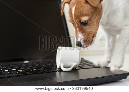 Dog Spilled Coffee On The Computer Laptop Keyboard. Damage Property From Pet