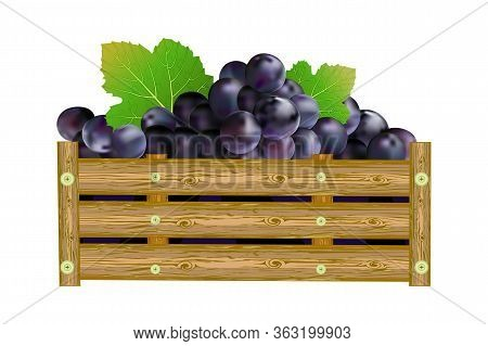 Grapes In Box Isolated On White Background. Crate Of Purple Grapes. Winery, Winemaking, Eco Farm, Tr