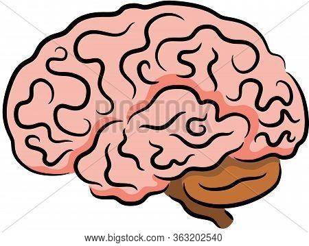 Illustration Of Human Brain, Isolated. Vector Illustration