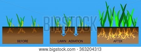 Lawn Aeration Stage Illustration. Lawn Aeration Process Steps - Before And After. Gardening Grass La