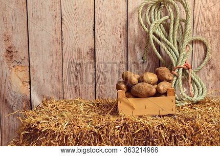 Russet Potatoes In Wood Box On Straw Bale
